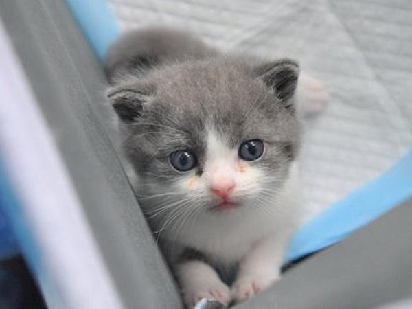 Mơ thấy máu mèo là điềm lành hay dữ, đánh con lô đề gì trúng?