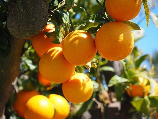 Mơ thấy quả cam có ý nghĩa gì?